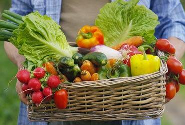 NÖM Gast Obst und Gemüse